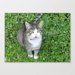 Cat in Clover Saying Hello Canvas Print