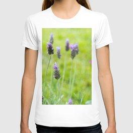 Lavender season T-shirt