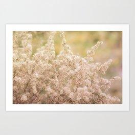 Romantic  Desert Broom Art Print