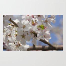 Honey Bee Pollinating Cherry Blossom Rug