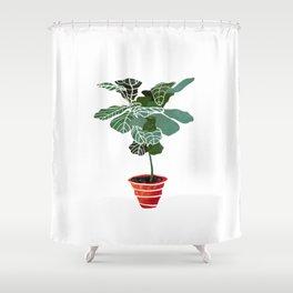 Fiddle leaf fig plant Shower Curtain