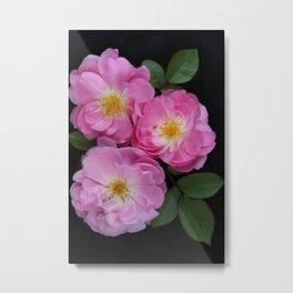English Rose Collection Metal Print
