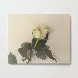 Dusky pink rose Metal Print