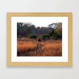 Robin Perched on Bird Feeder Stand Framed Art Print