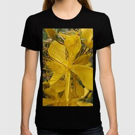 Hypericum flower closeup T-shirt