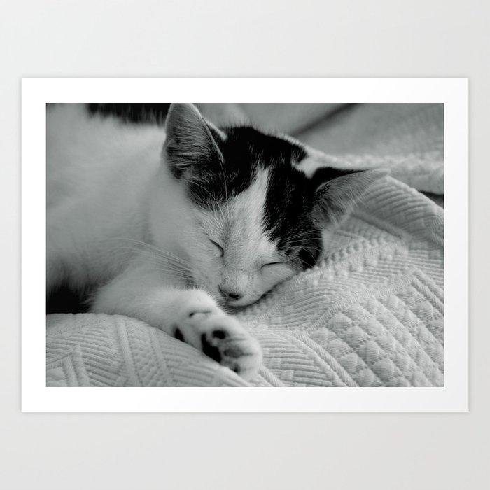Sleepy Cat - Black and White Cat Photo Art Print