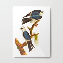 Mississippi Kite Bird Metal Print