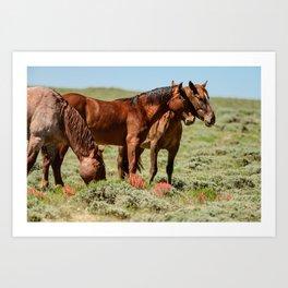 Wyoming Wild_Horses - II Art Print
