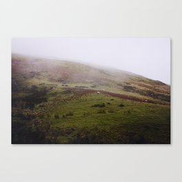 Sheep in Wales...who woulda thunk it? Canvas Print