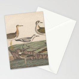 Spotted Sandpiper Bartrams Sandpiper Ring Plover Sanderling Plover Golden Plover Killdeer Plover13 Stationery Cards