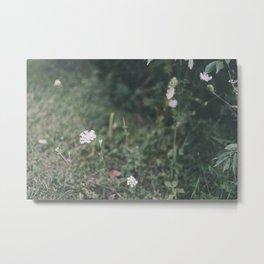 August Wildflowers IV Metal Print