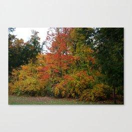 A Gentle Wind in Wildwood Canvas Print