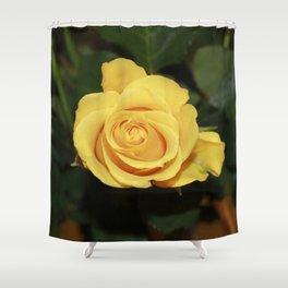 Rose_2014_1201 Shower Curtain