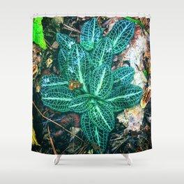 Rattlesnake Plantain Shower Curtain