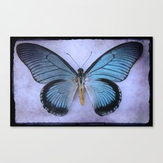 Butterfly Wing of Blues Canvas Print
