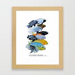 The Rare Mbuna Framed Art Print