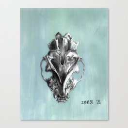 Ventral Surface of a Mink Skull Canvas Print