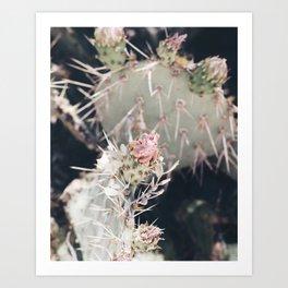 Cactus Rose Art Print