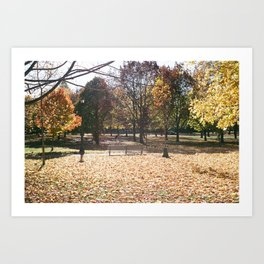 Autumn in Bellwoods Art Print
