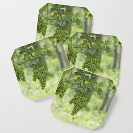 Bunch of grapes on vineyard Coaster