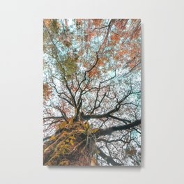 Ancient oak tree with fall tones Metal Print