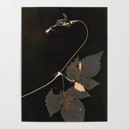 Snakewinder Hops Botanical Lumen Print Poster