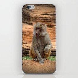 Hamadryas Baboon iPhone Skin