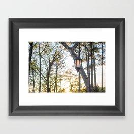 Golden Fall Framed Art Print