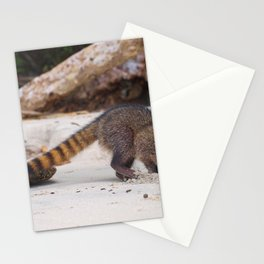 Funny wild racoon feeding in Costa Rica Stationery Cards