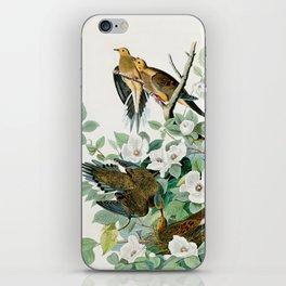 Carolina Turtle Dove, Birds of America by John James Audubon iPhone Skin