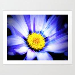 Blue Daisy Art Print