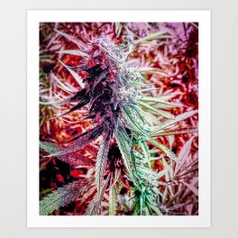 Candy (cannabis sugar) Art Print
