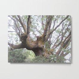 Mountain Oak Metal Print