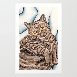 Grey Cat Art Print