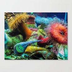 Aquarium Creatures Canvas Print