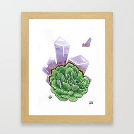 Echeveria Framed Art Print
