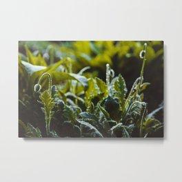Rain Plants Metal Print