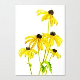 Yellow Black Eyed Susan on white Canvas Print