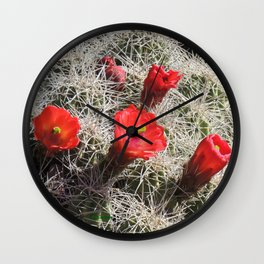 A Hedgehog Cactus Looks Sunward Wall Clock