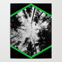 Grey forest Poster