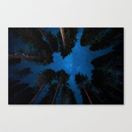 Under the forest Canvas Print