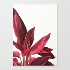 Red Leaves II Canvas Print
