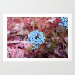 Blue Flowers, Red Thorns ~ Cedars of Lebanon, Tennessee Art Print