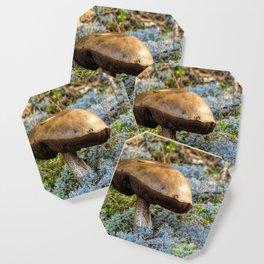 mushroom in swedish forest Coaster
