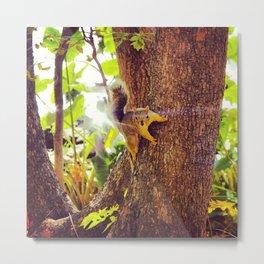 Super Squirrel Metal Print