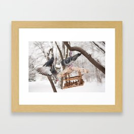 Three hungry pigeons on bird feeder Framed Art Print