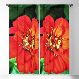 The Red Zinnia Blackout Curtain