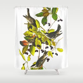 Blackpoll Warbler Bird Shower Curtain