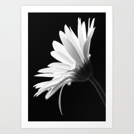Flower BW Art Print