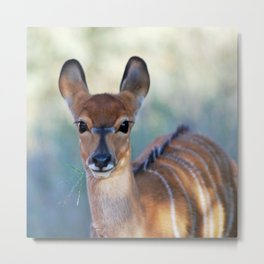 Nyala deer photo Metal Print